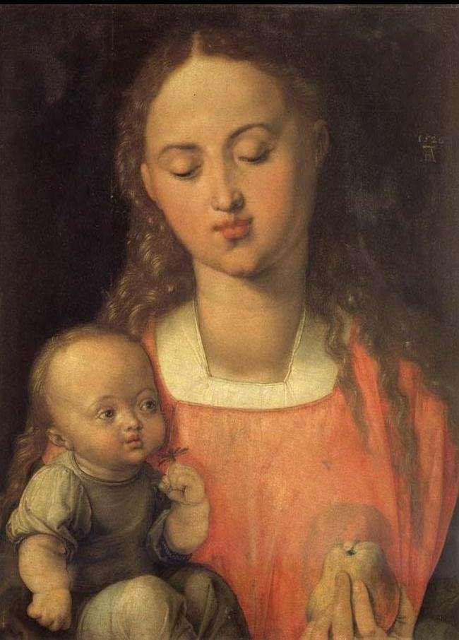 Albrecht Dürer. Vierge à la poire.1526. Huile sur bois. 31 x 43 cm. Galleria degli Uffizi (Gallerie des Offices). Florence.